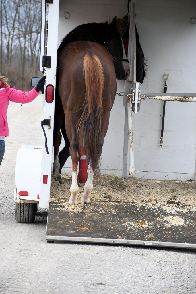Arrival of London House at New Vocations' Kentucky facility. (Melissa Bauer-Herzog/America's Best Racing)