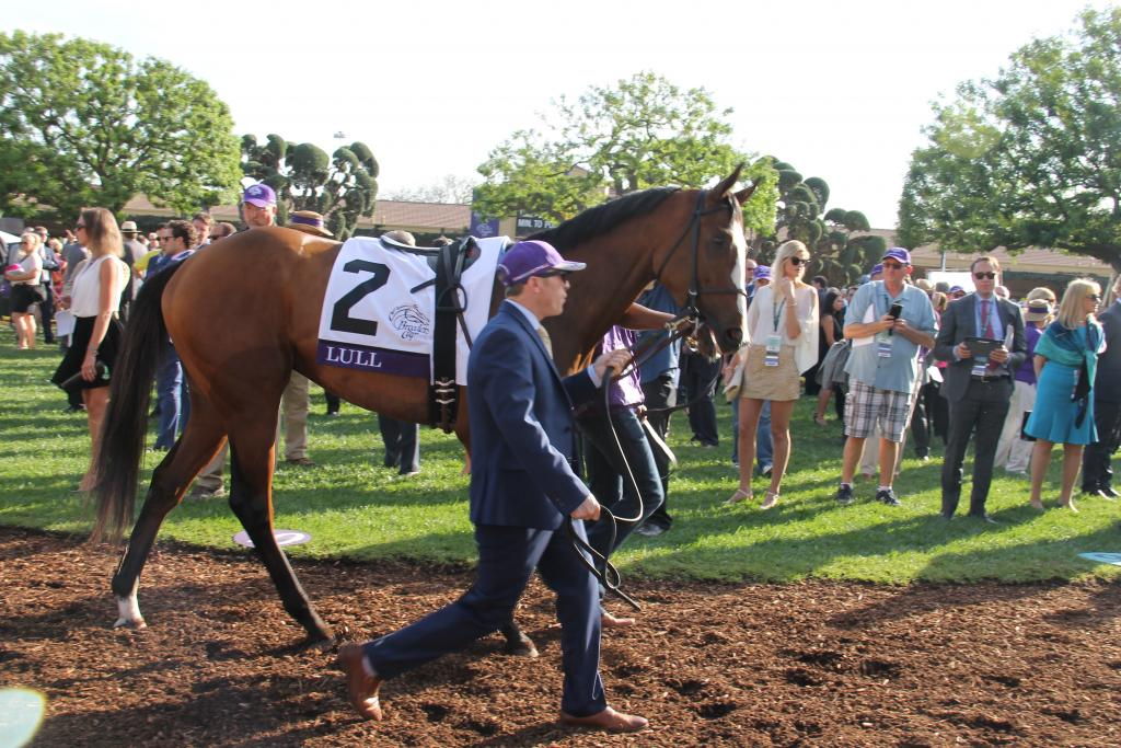 Breeders' Cup Juvenile Fillies Turf runner Lull. (Ariel Cooper photo)