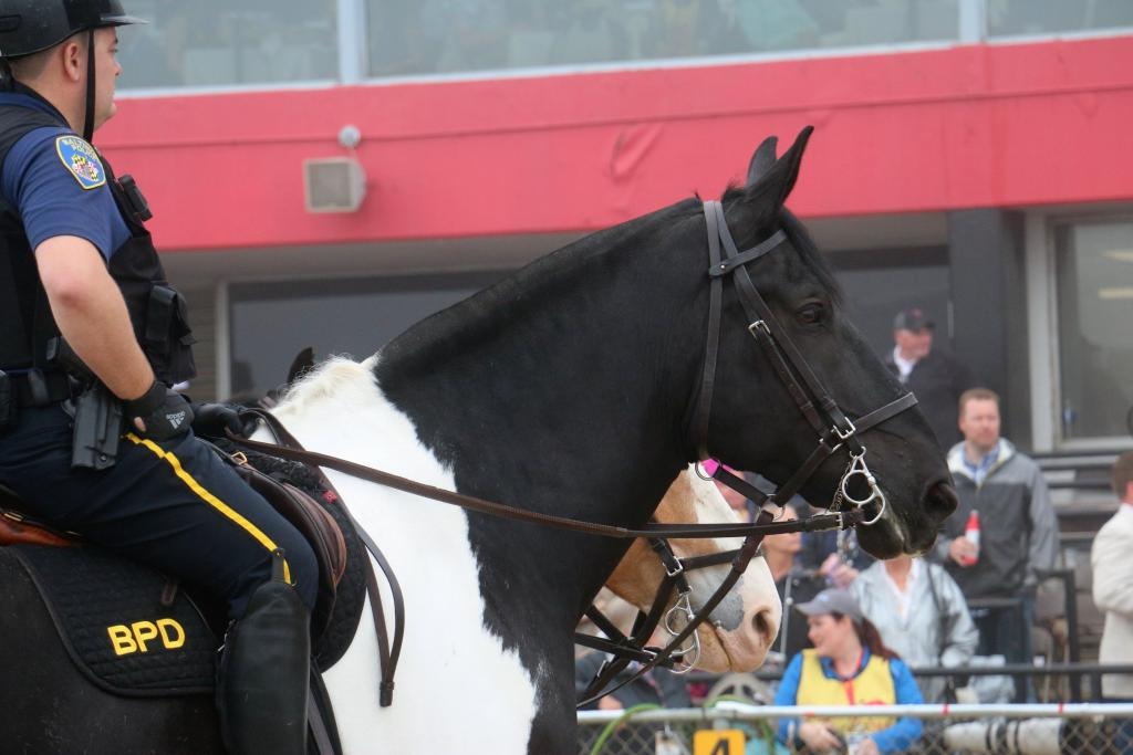 A majestic police horse surveys the Pimlico crowd and Preakness horses. (Julie June Stewart photo)