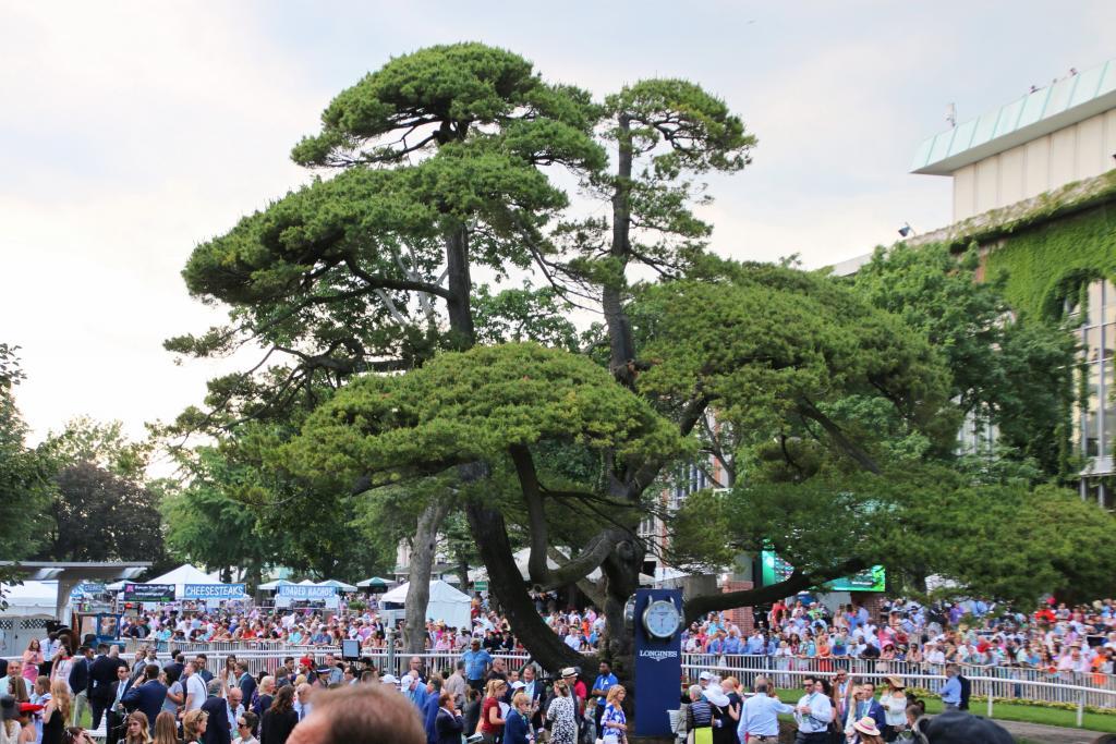 Majestic White Japanese Pine. (Julie June Stewart photo)