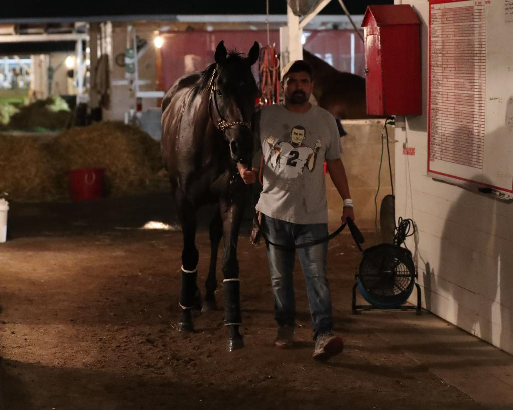 Indiana Derby runner-up Major Fed at the barn at Churchill Downs.