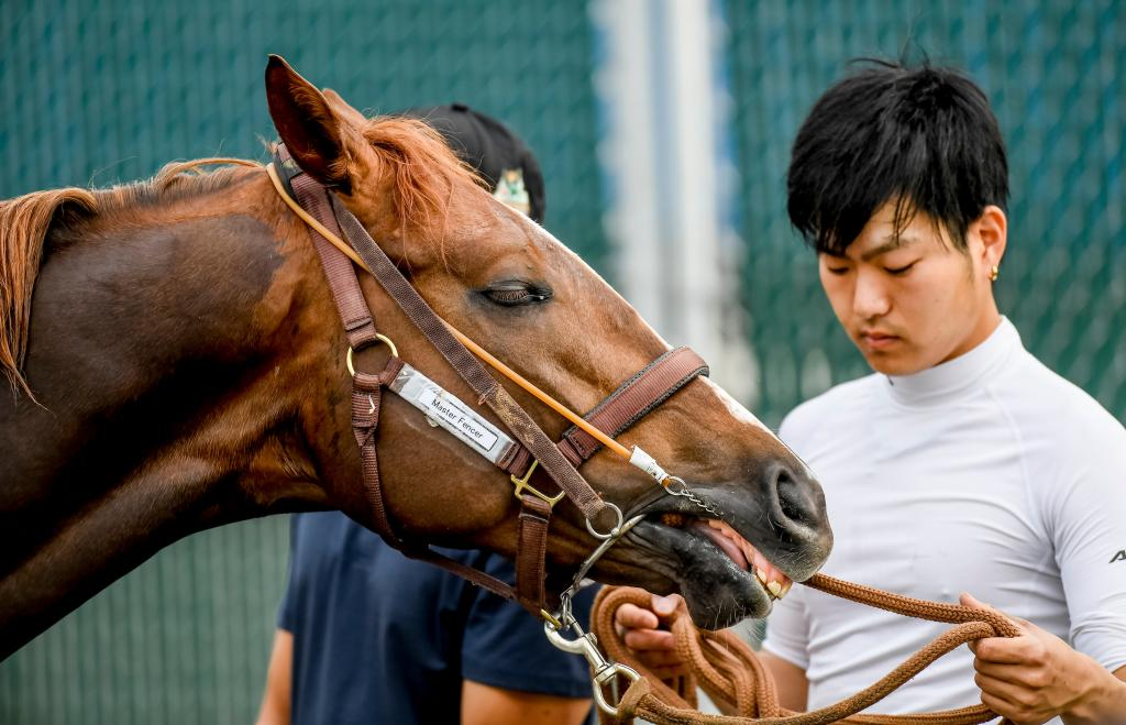 Japanese-based contender Master Fencer, sixth in the Kentucky Derby. (Eclipse Sportswire)