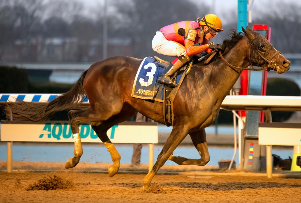 Belmont Stakes Presented by NYRA Bets third-place finisher Max Player winning the Withers Stakes in February at Aqueduct.