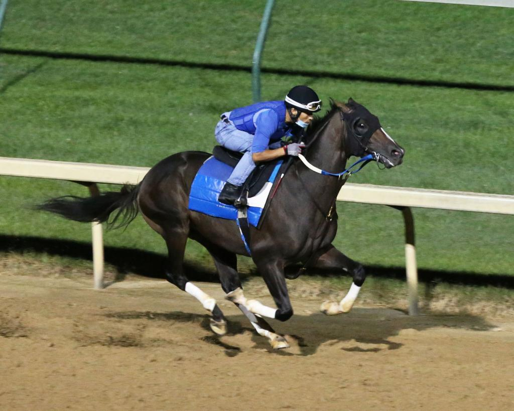 Belmont Stakes Presented by NYRA Bets third-place finisher Max Player during morning exercise at Churchill Downs.