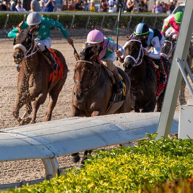 Gulfstream Park Oaks runner-up Millefeuille. (Eclipse Sportswire)