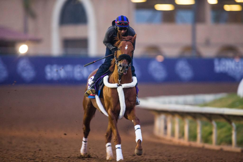 Elite sprinter Mind Your Biscuits has successfully stretched out in distance in 2018. (Eclipse Sportswire)