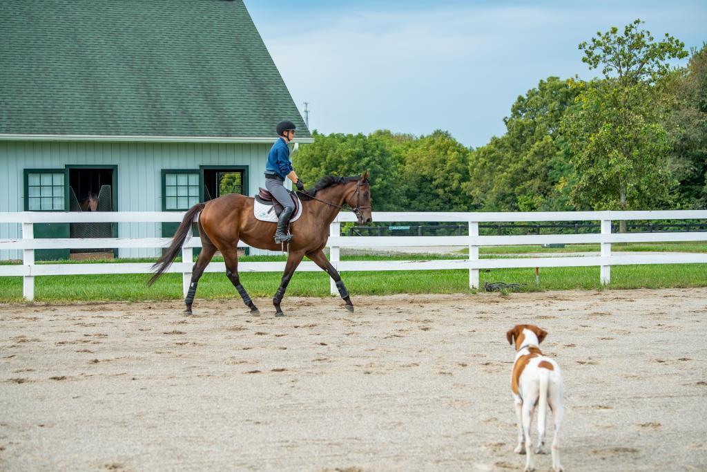 Money Moves befriends a dog. (Melissa Bauer-Herzog/America's Best Racing)