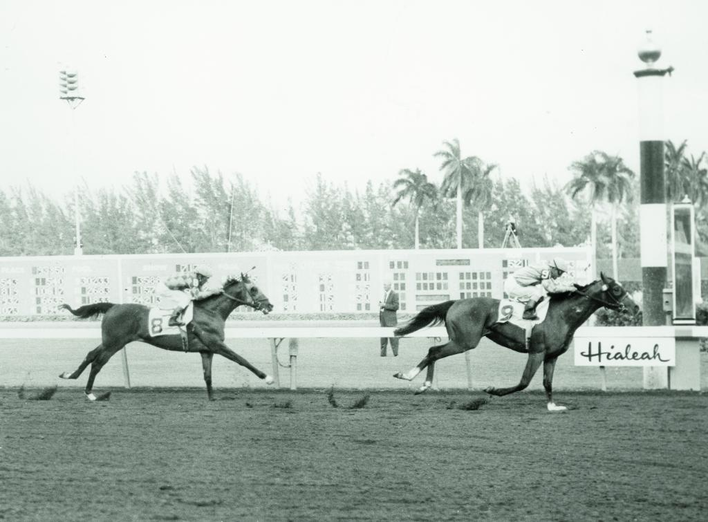 Northern Dancer and jockey Willie Shoemaker win the 1964 Flamingo Stakes at Hialeah Park in Florida.  (Jim Raftery/BloodHorse photo)