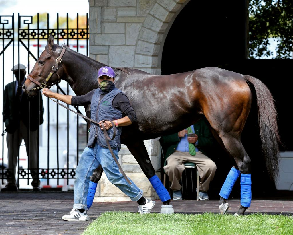 Grade 1 winner Ollie's Candy, runner-up in the Grade 1 Juddmonte Spinster Stakes Oct. 4 at Keeneland. (Coady Photography)