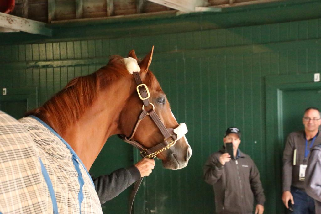 One final pose by California Chrome, with Jay Privman (far right) of Daily Racing Form watching. (Julie June Stewart photo)