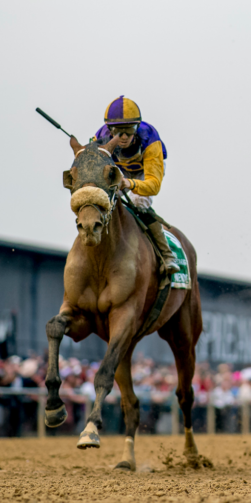 2019 Preakness third-place finisher Owendale, a multiple graded stakes winner this year. (Eclipse Sportswire)
