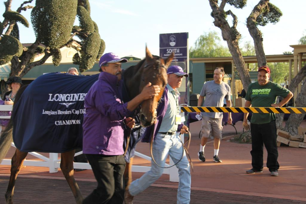 Celebratory pats for Breeders' Cup Distaff winner Beholder. (Ariel Cooper photo)