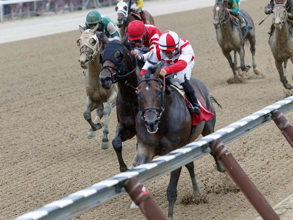 Patternrecognition winning an allowance race at Saratoga in August 2018.. (Eclipse Sportswire)