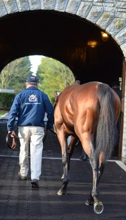 Retired American Pharoah Arrives To Much Fanfare At