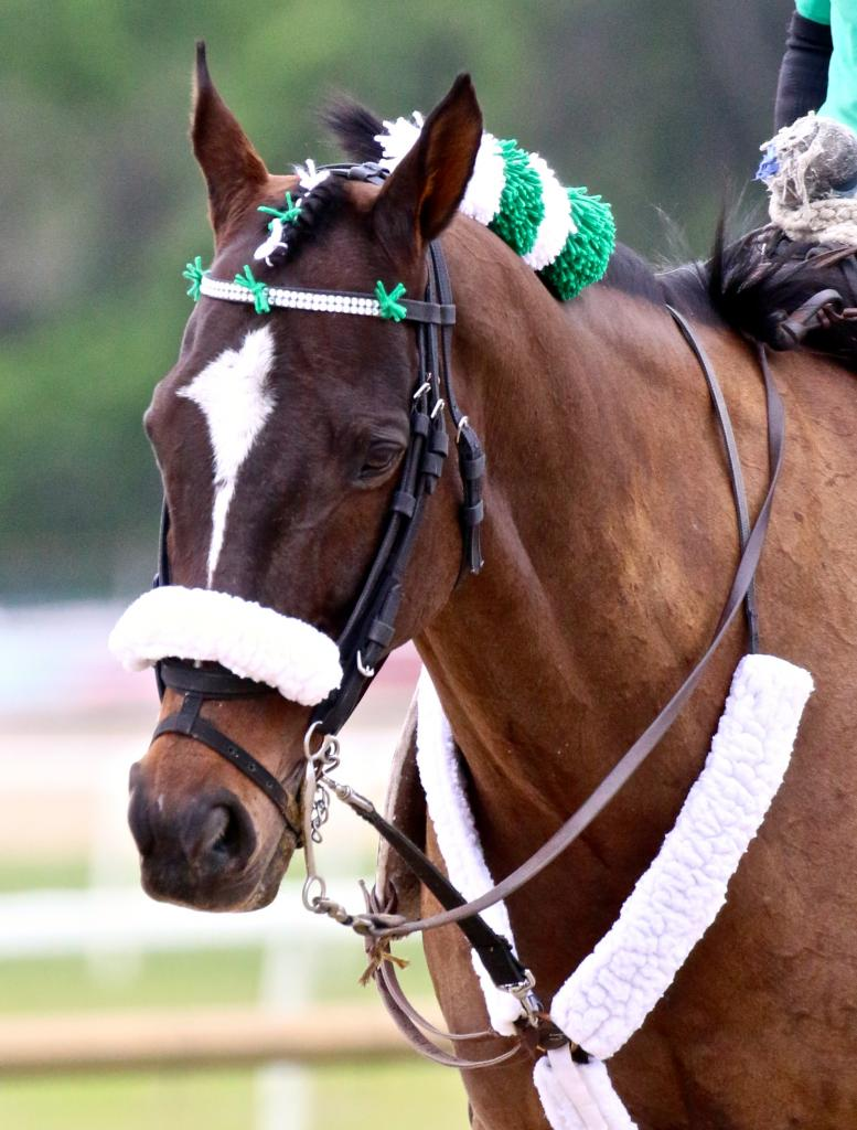 A stylish lead pony on Tampa Bay Derby day. (Penelope P. Miller/America's Best Racing)