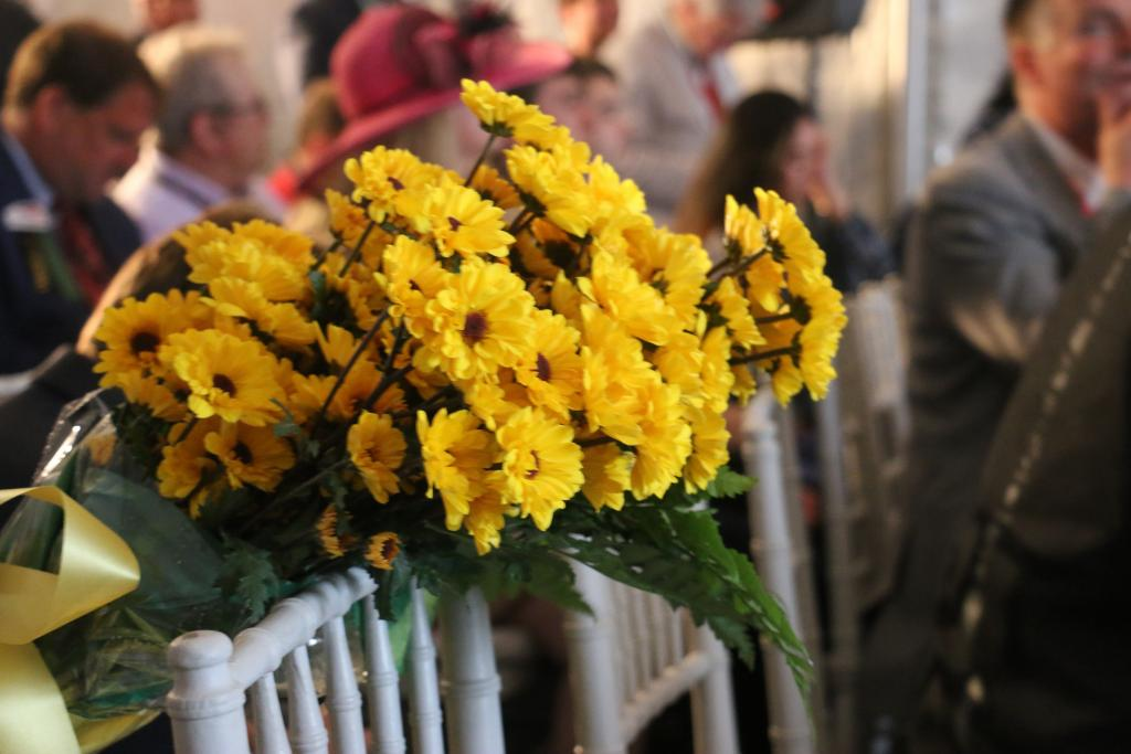 Preakness Black-Eyed Susans. (Julie June Stewart photo)