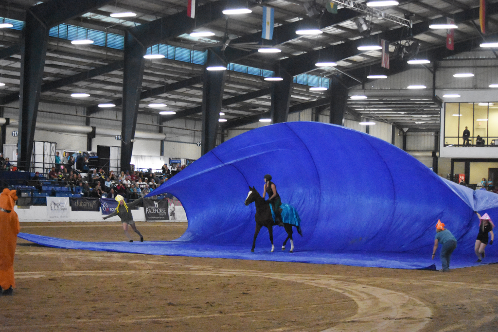 Fairly Obvious competed in the Freestyle discipline. (Melissa Bauer-Herzog/America's Best Racing)