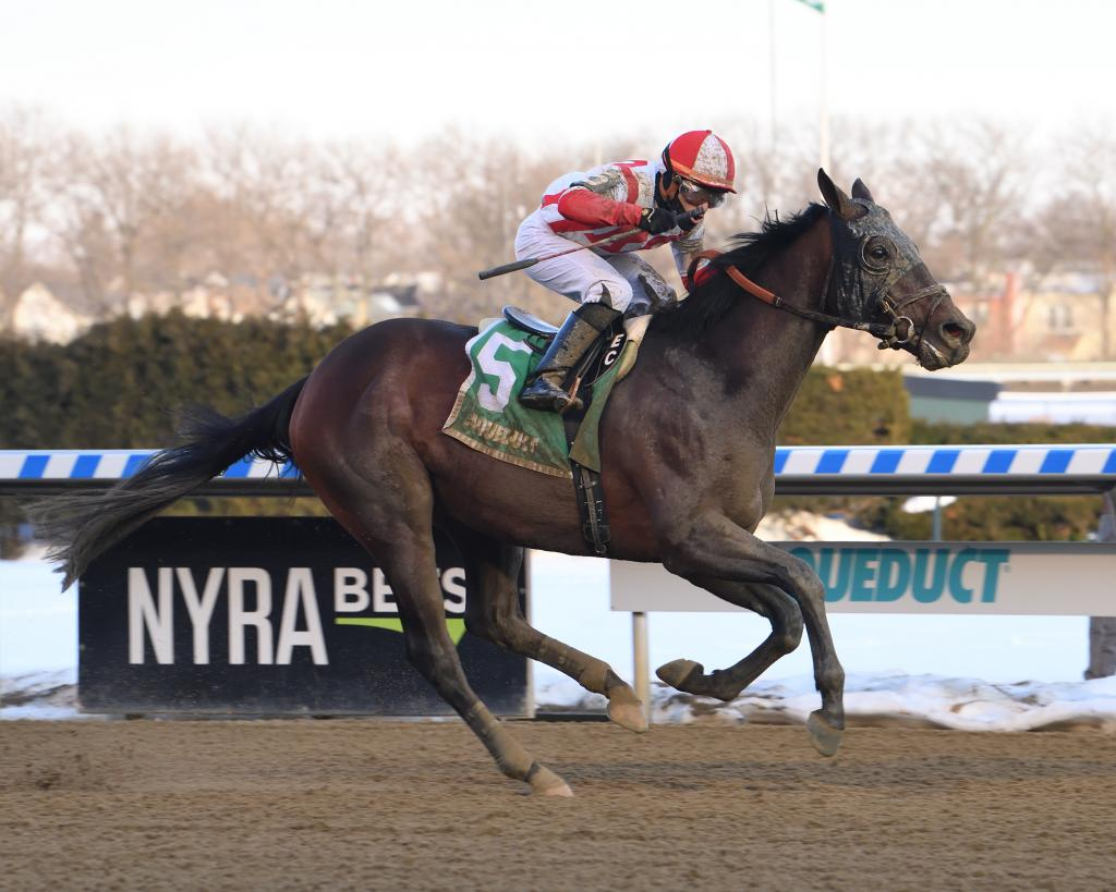 Withers Stakes winner Risk Taking.