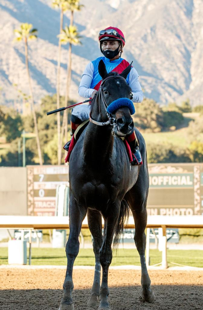 Medina Spirit after winning the Robert B. Lewis Stakes in January. (Eclipse Sportswire)