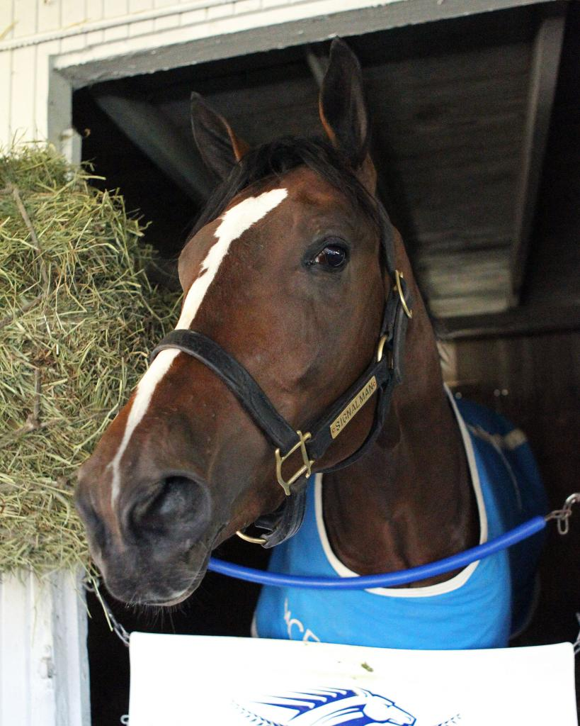 Toyota Blue Grass Stakes third-place finisher Signalman. (Coady Photography)