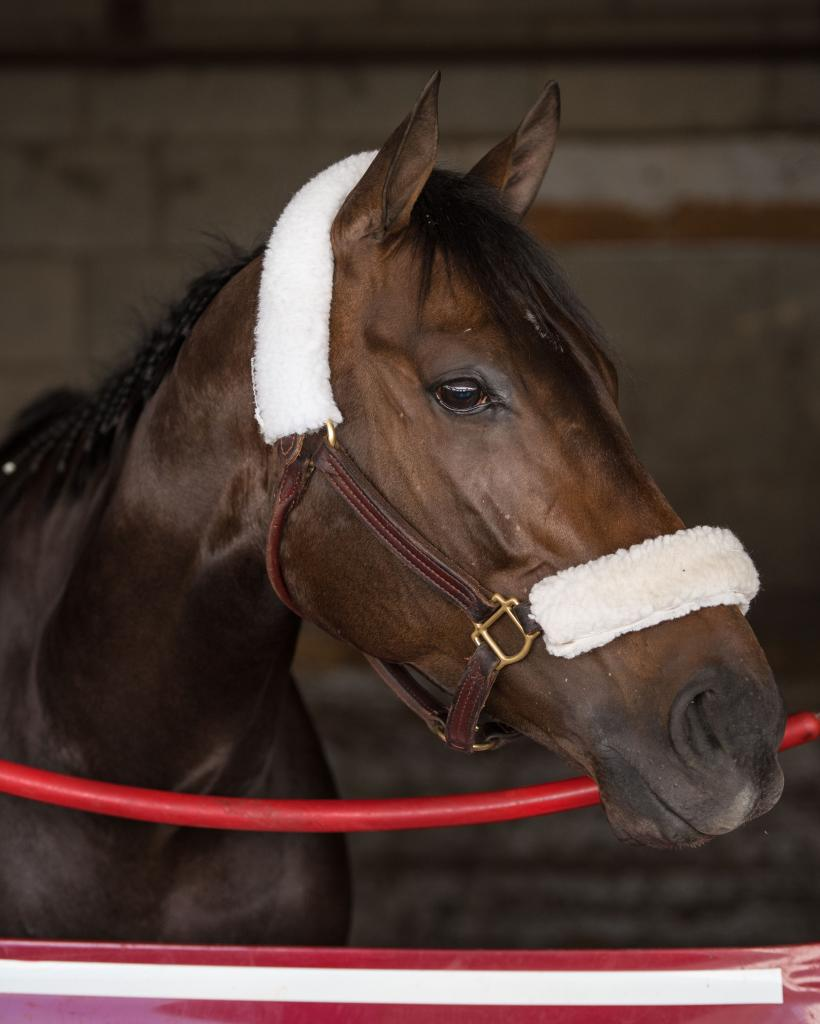 Tepin at Keeneland in April 2016. (Eclipse Sportswire)