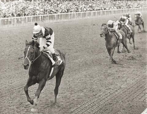 Seattle Slew winning 1977 Belmont Stakes at Belmont Park. (Bob Coglianese/BloodHorse Library)