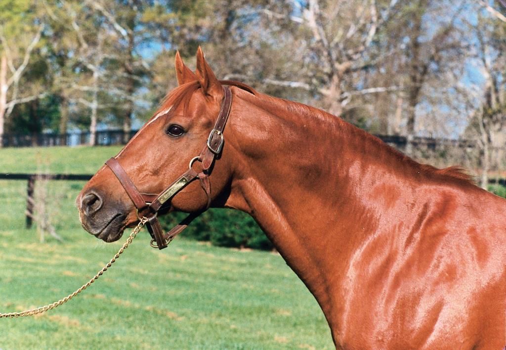 Secretariat in retirement. (Blood-Horse Library)