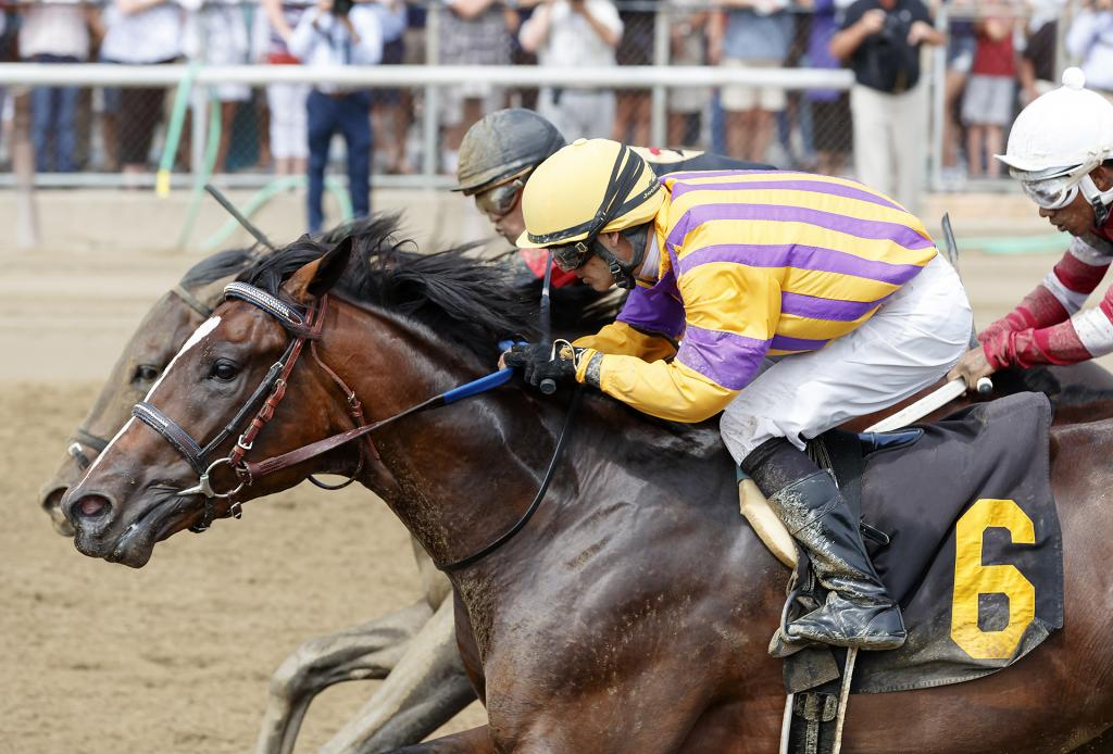 Toyota Blue Grass Stakes third-place finisher Signalman. (Eclipse Sportswire)