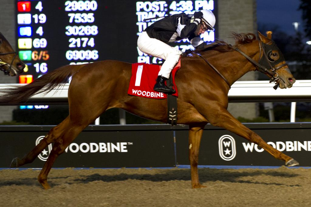 Peter Pan Stakes runner-up finisher Sir Winston. (Michael Burns/Woodbine Entertainment Group)