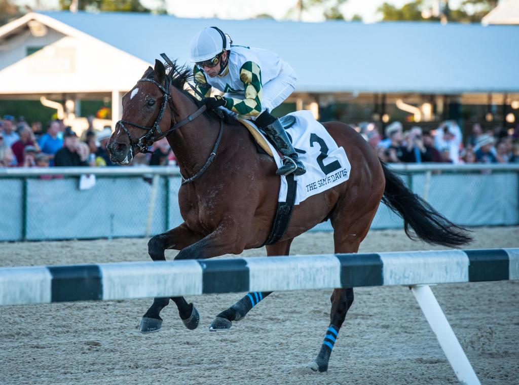 Sole Volante winning the Grade 3 Sam F. Davis Stakes in February at Tampa Bay Downs.