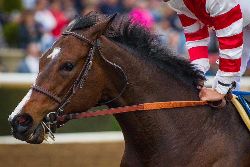 Songbird winning the 2016 Santa Ysabel Stakes. (Eclipse Sportswire)
