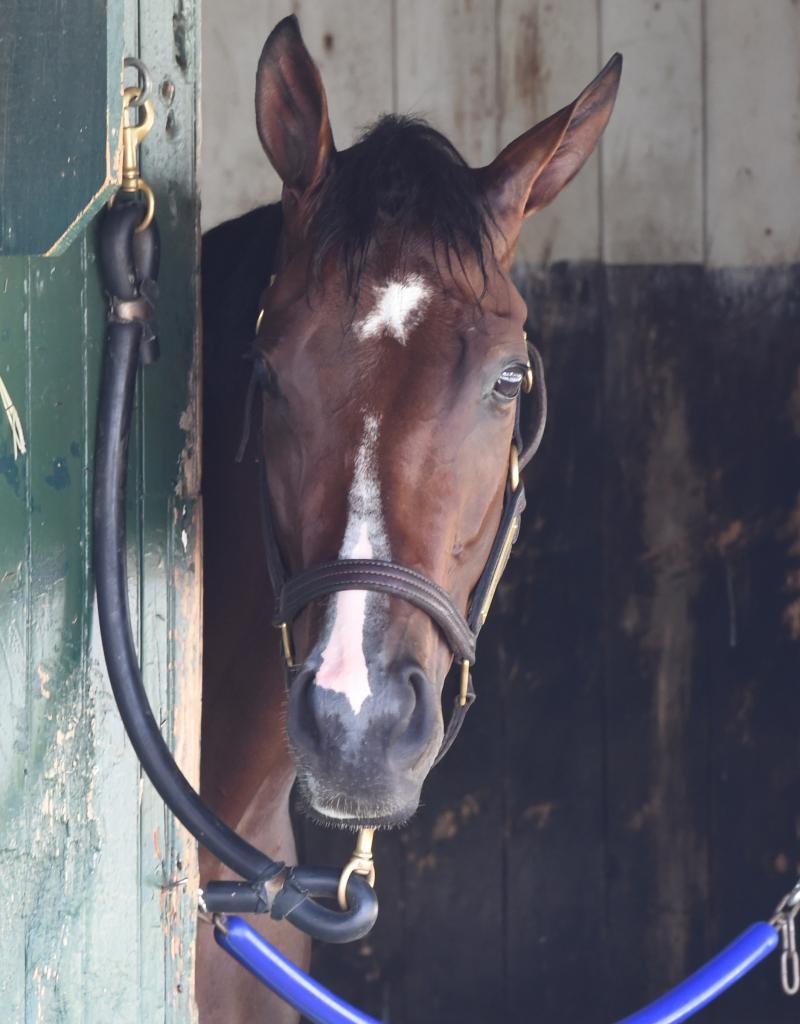 Songbird at Saratoga in summer 2016. (Eclipse Sportswire)