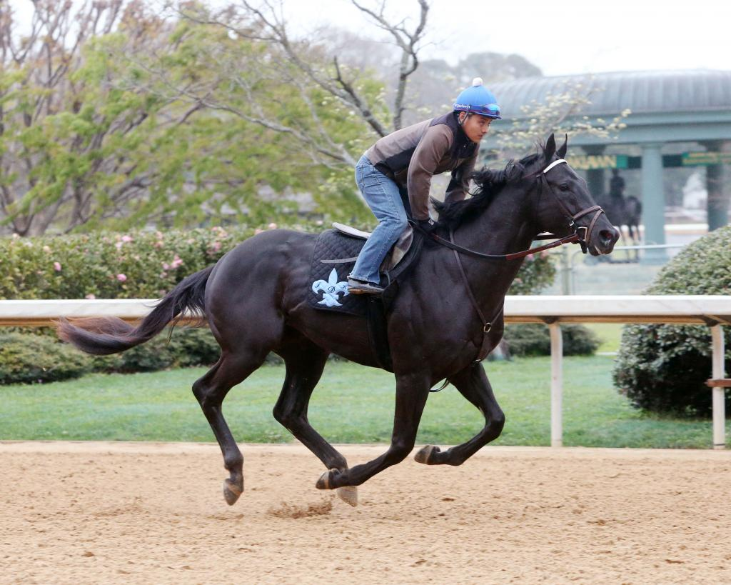 Sonneteer (Coady Photography)