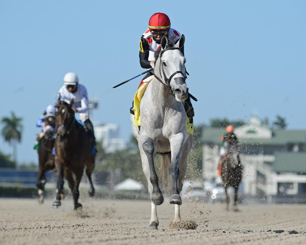 Curlin Florida Derby Presented by Hill 'n' Dale Farms at Xalapa runner-up Soup and Sandwich.