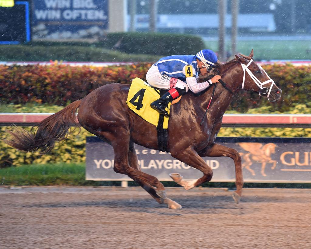 Louisiana Derby runner-up Spinoff. (Lauren King/Gulfstream Park)