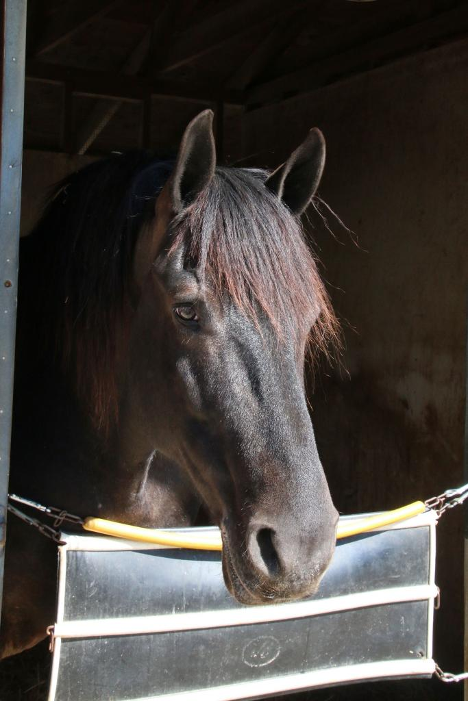 Stall contemplation. (Julie June Stewart photo)