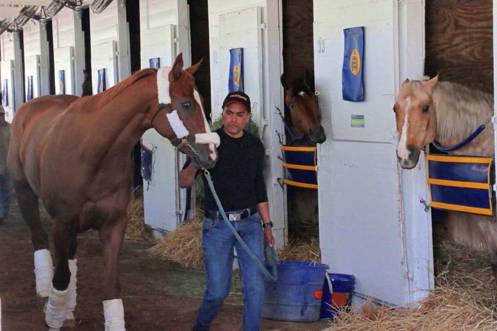 Sunny greeting Solomini at Churchill Downs. (Julie June Stewart photo)