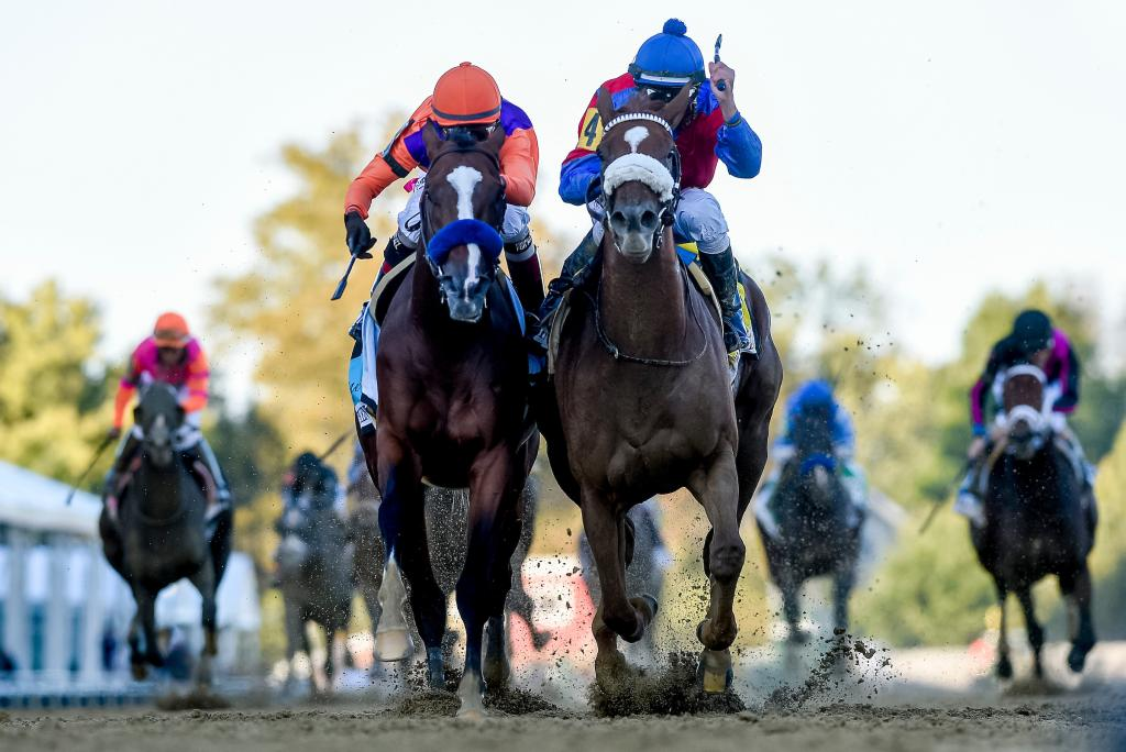 Multiple Grade 1 winner Swiss Skydiver, winner of the Grade 1 Preakness Stakes against males Oct. 3 at Pimlico Race Course. (Eclipse Sportswire)