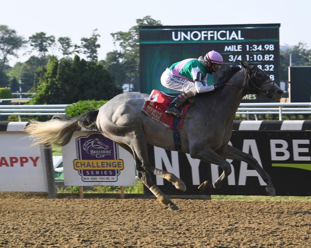 Multiple Grade 2 winner Tacitus. (NYRA/Susie Raisher)