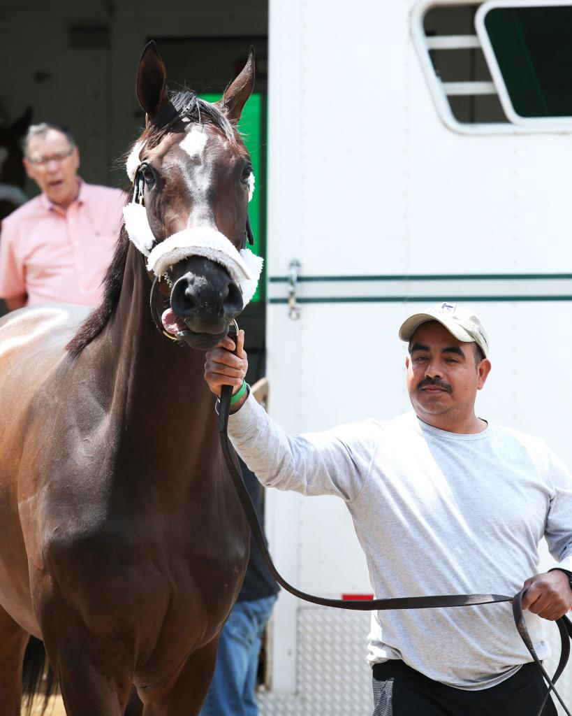 Multiple graded stakes winner Tax (Coady Photography)