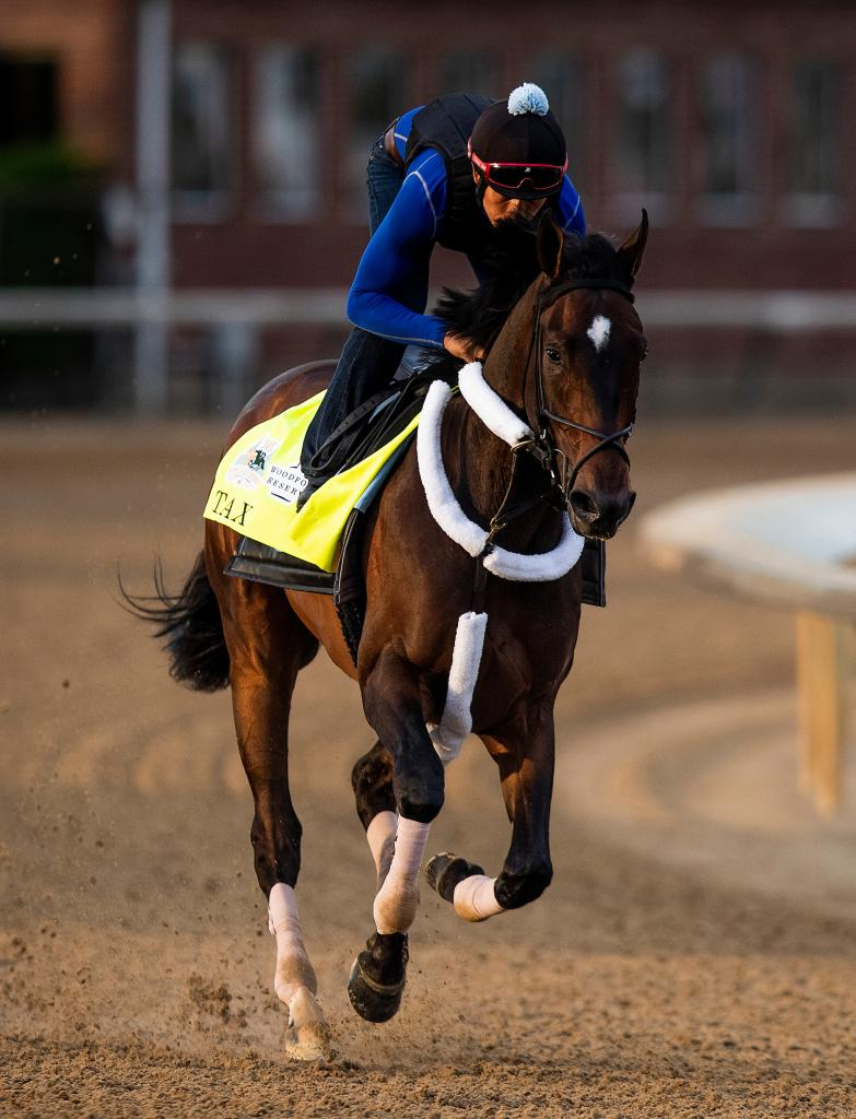Withers Stakes winner Tax. (Eclipse Sportswire)