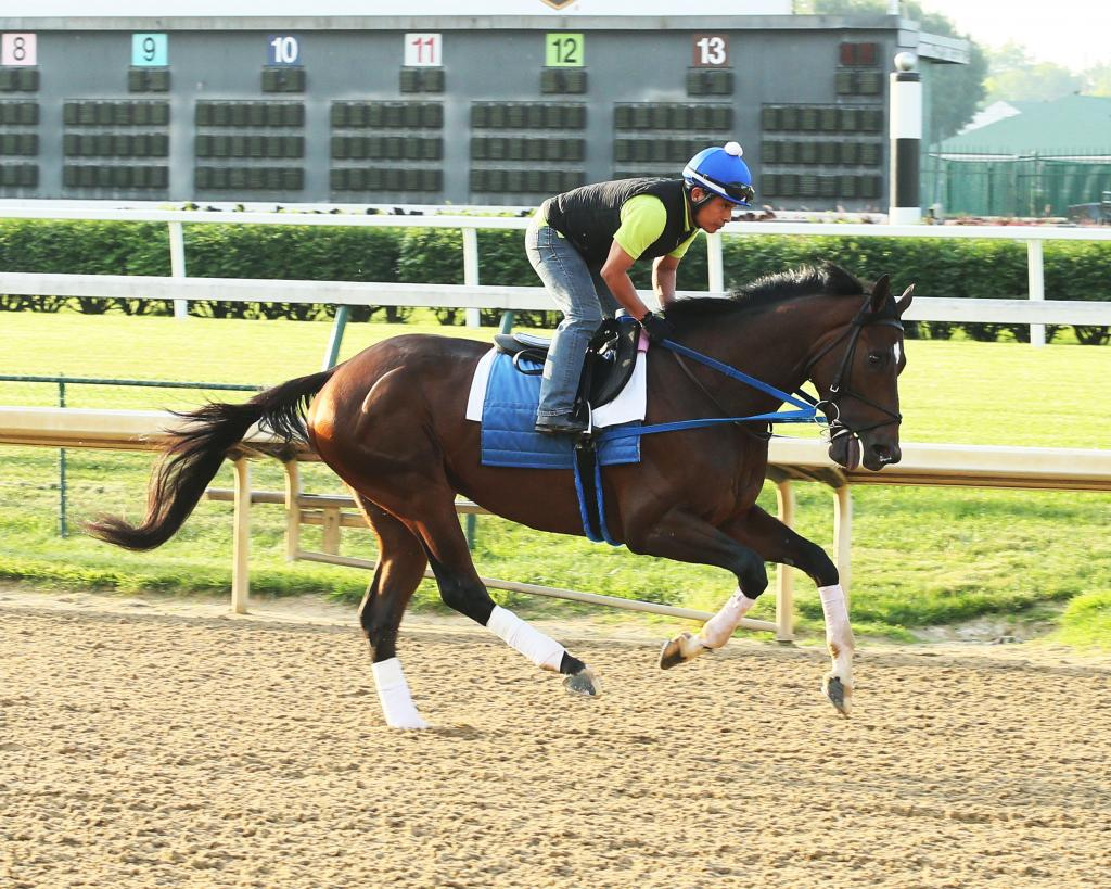 Tenfold galloping at Oaklawn Park before the Arkansas Derby. (Coady Photography)