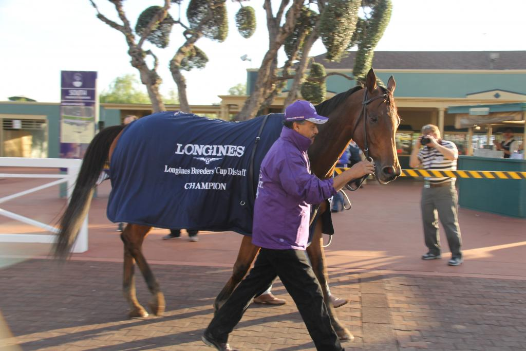 Breeders' Cup Distaff winner Beholder - the Mare, the Myth, the Legend. (Ariel Cooper photo)