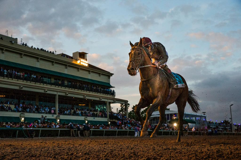 Toast of New York, winner of the 2014 United Arab Emirates Derby. (Eclipse Sportswire)