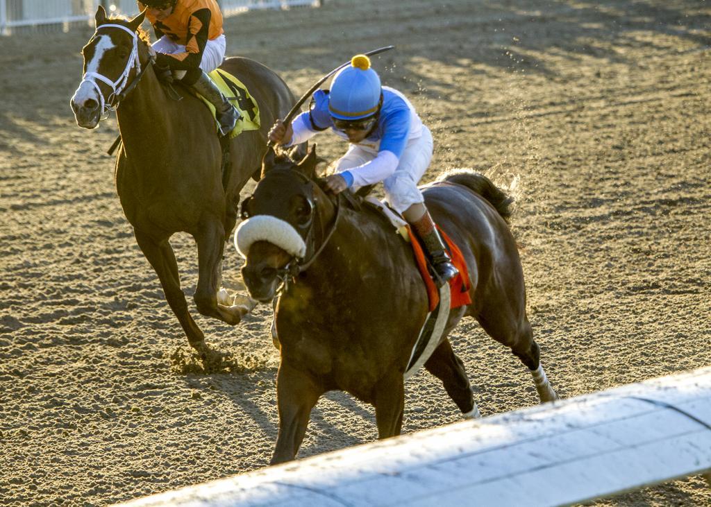 Tom's d'Etat winning the Tenacious Stakes in December 2018. (Amanda Hodges Weir/Hodges Photography)