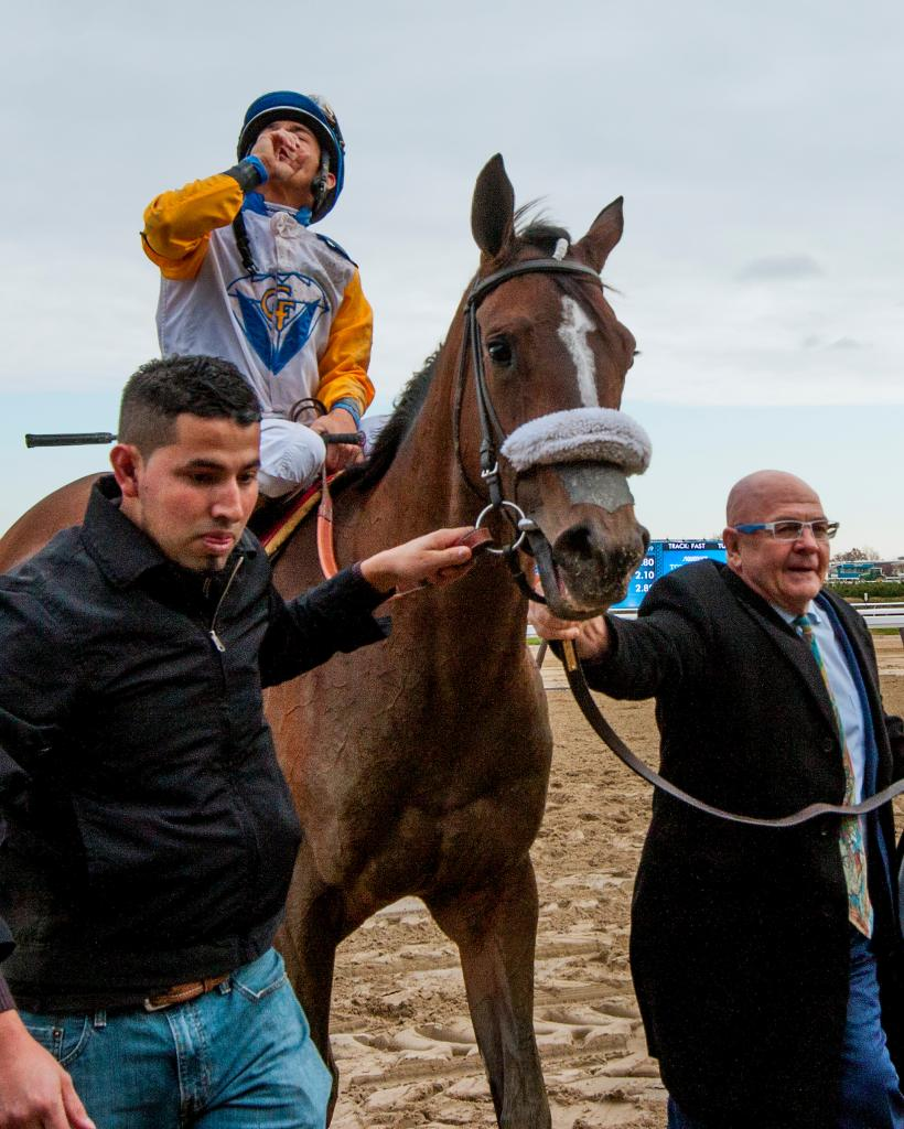 Grade 1-placed stakes winner Verve's Tale (Eclipse Sportswire)