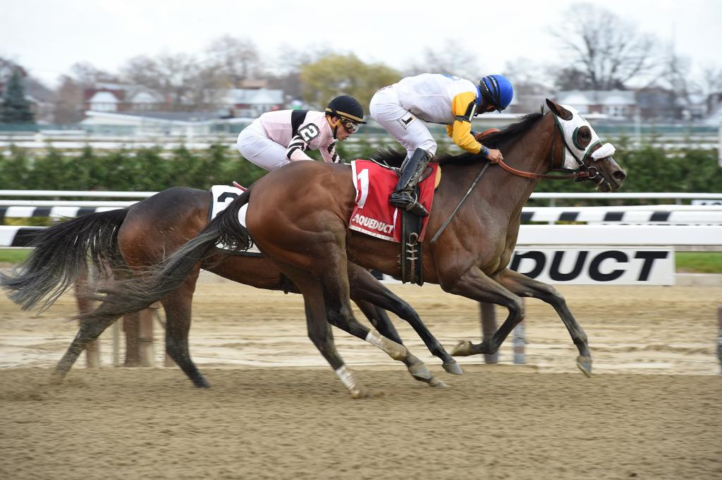 Grade 1-placed stakes winner Verve's Tale winning 2017 Summer Colony Stakes. (Susie Raisher/NYRA)