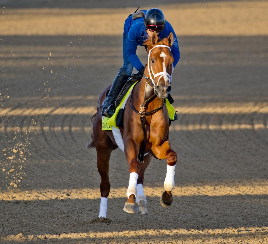 Vino Rosso exercising at Churchill Downs. (Eclipse Sportswire)