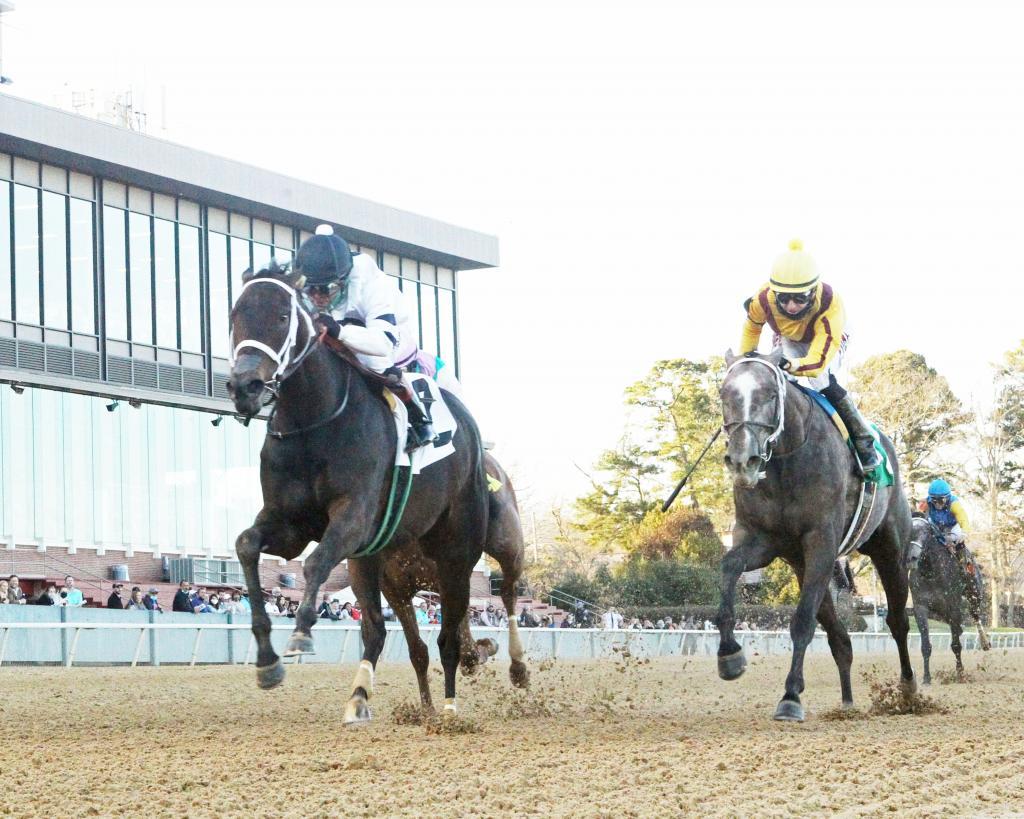 Honeybee Stakes winner Will's Secret. (Coady Photography)