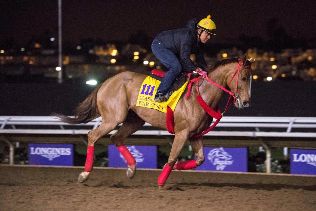 Multiple graded stakes winner War Story (Eclipse Sportswire)